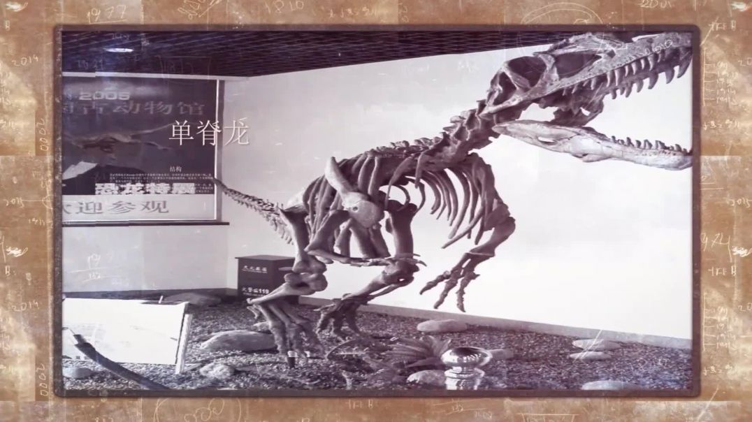 中国的恐龙(2)