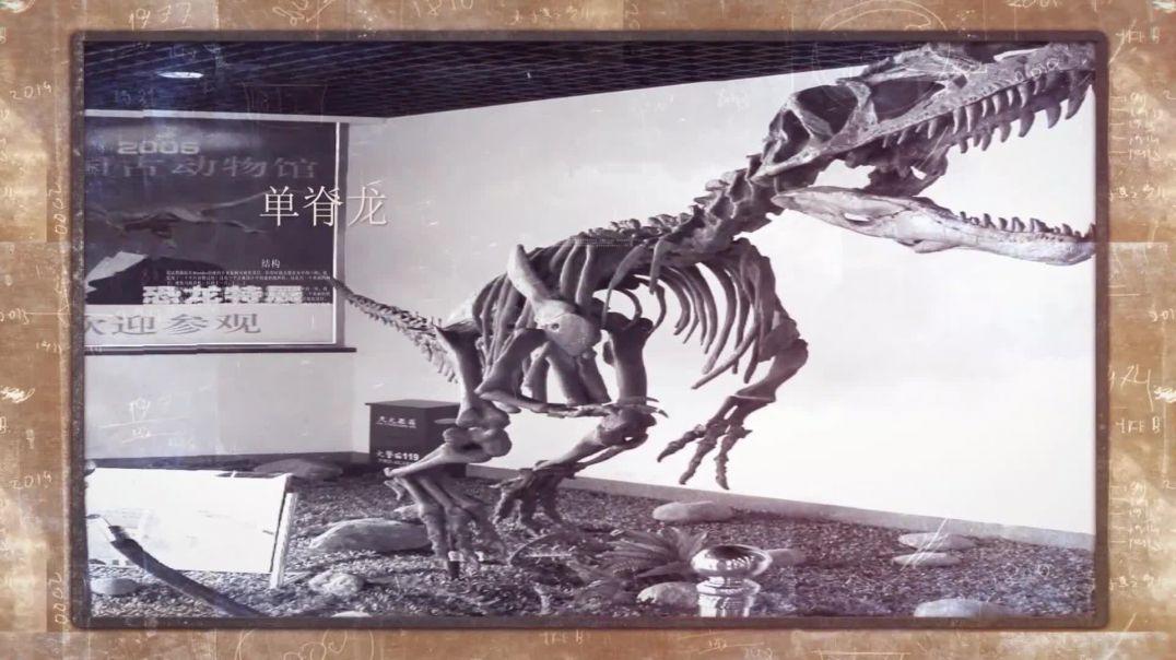 中国的恐龙(4)