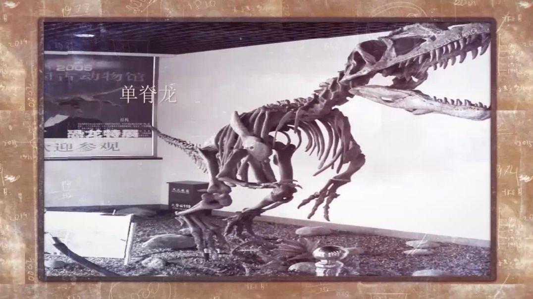 中国的恐龙1