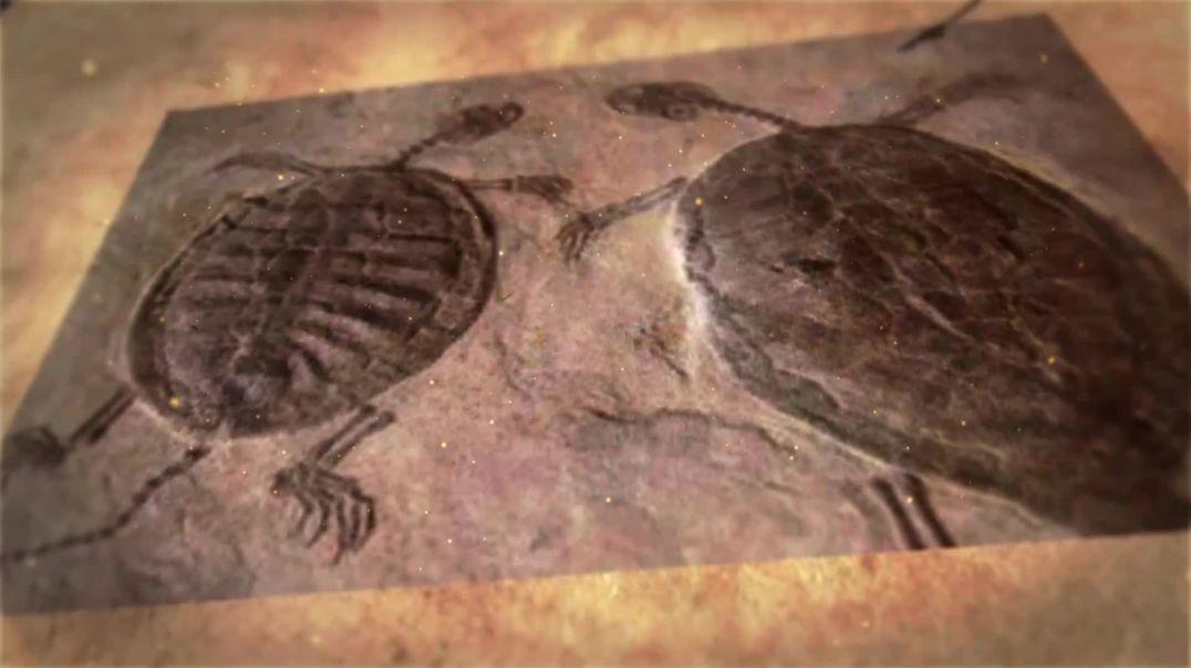 龟类的前世今生一